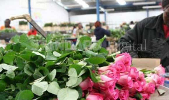 Flower exports rise to 80 per cent