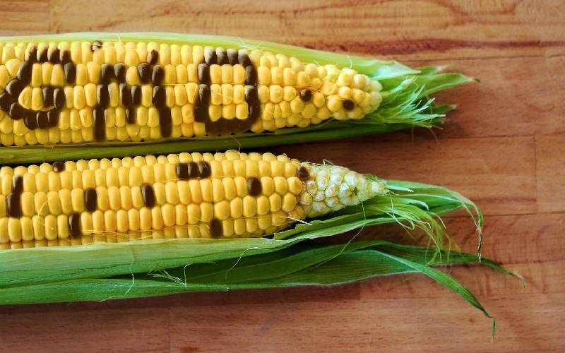 GM crops hold the key to feeding world's fast growing population