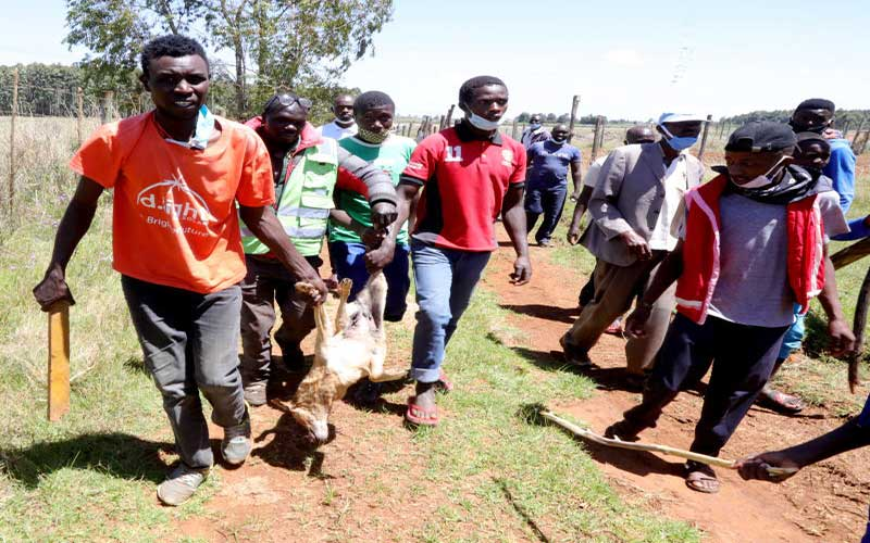 Governor Mandago should save residents from killer stray dogs