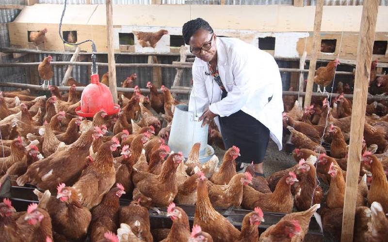 High cost of feeds drives farmers out of dairy and poultry business