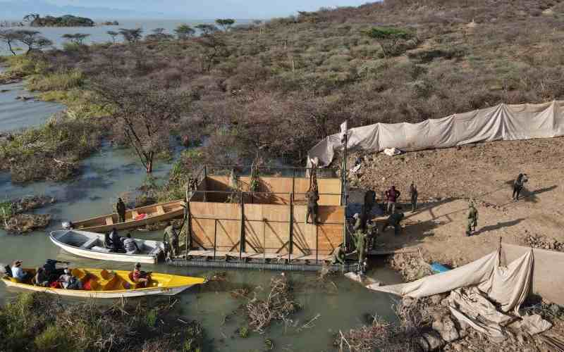 Last of 9 giraffes rescued from disappearing island