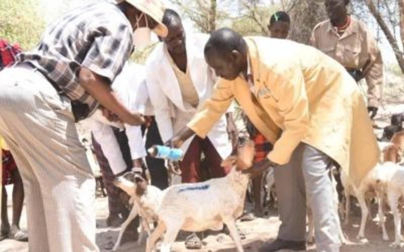 Mass animal vaccination kicks off at the border