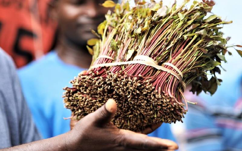 Miraa to be removed from hard drugs list – Matiang'i