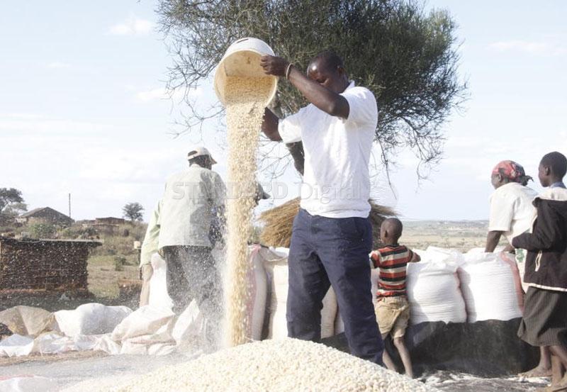 Farmers support 'rebel' Jubilee MPs in maize sale furore