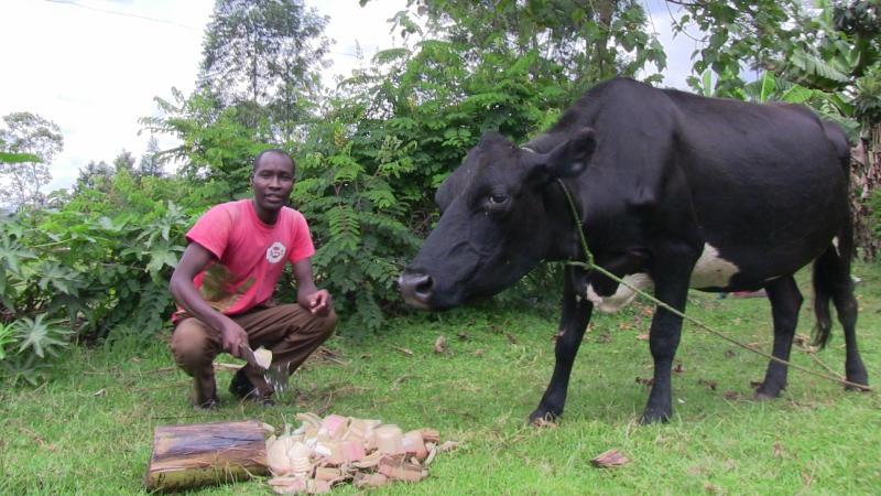 I make Sh4,000 per day from milk