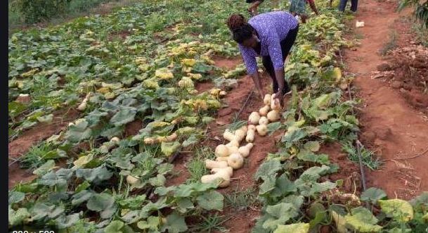 Women, youth in agriculture tipped of Sh10m funding