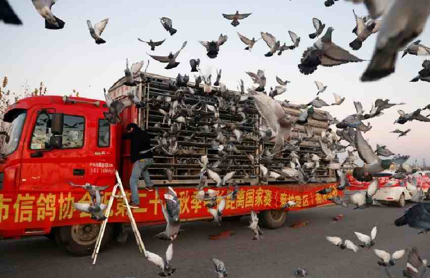 China's pigeon racing enthusiasts spend big to indulge their passion