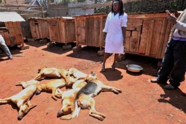Dogs that killed the late Nyeri Governor Nderitu Gachagua grandson 'were on heat'