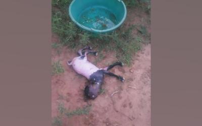 Machakos goat gives birth to kid with human head