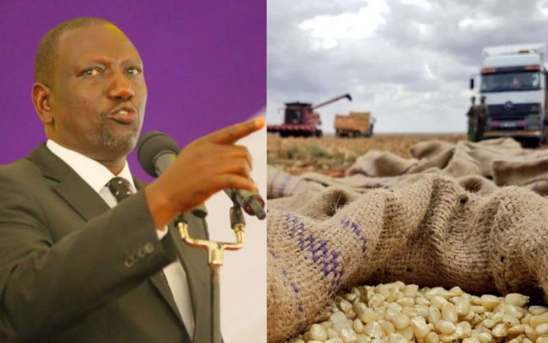 Ruto: I do not sell my maize; I use it to feed chicken