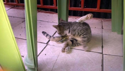 Shock as Machakos cat walks out of a room wearing a condom
