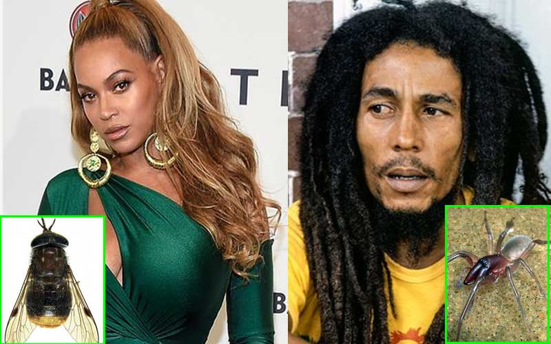 Beyonce horsefly, Marley spider: Eight animals named after celebrities