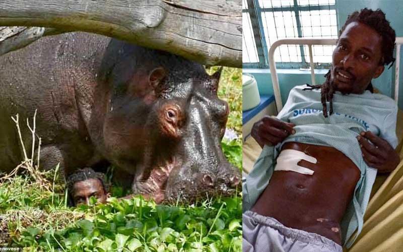 Giant hippo almost killed me - Naivasha fisherman