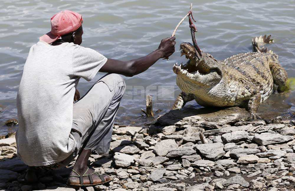 Man wows residents and tourists with his love for crocodiles