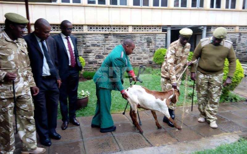 Ole Sankok's goat scares waheshimiwa in Parliament
