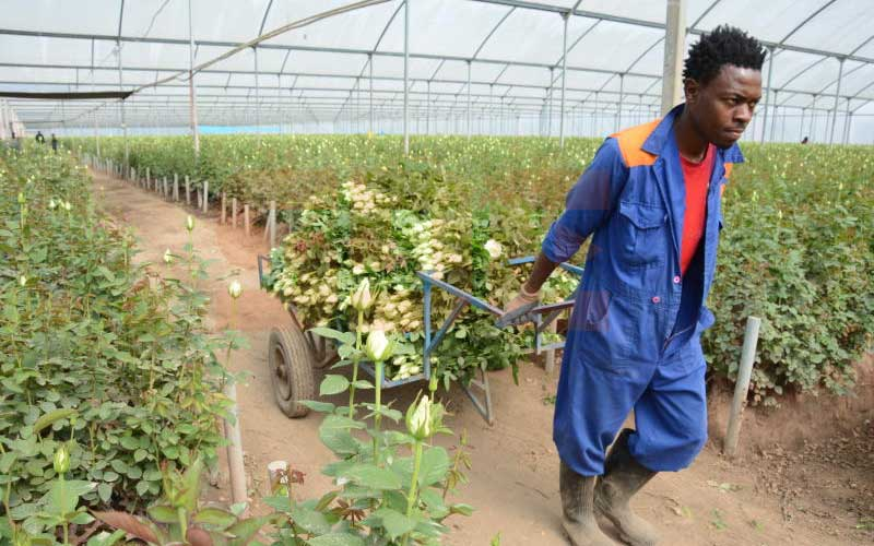 Covid-19 crisis: Cotu okays sacking of 50,000 farm workers without pay