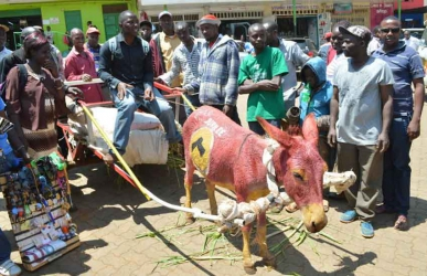 Grand entry! Man paints his donkey with Jubilee party colours, hits the campaign trail