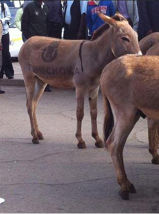 Tumechoka Donkeys