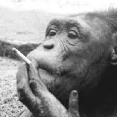Sebastian the smoking chimp