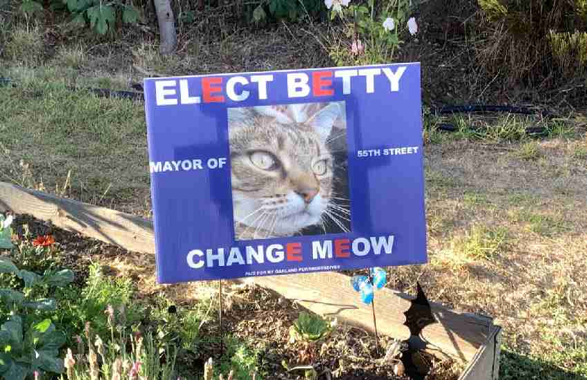 Change Meow: California neighborhood where dogs and cats are vying for mayor
