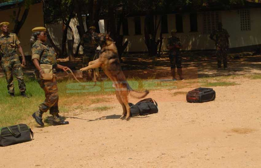 Shipped for Sh3 million: Why KWS' four K-9s are pampered