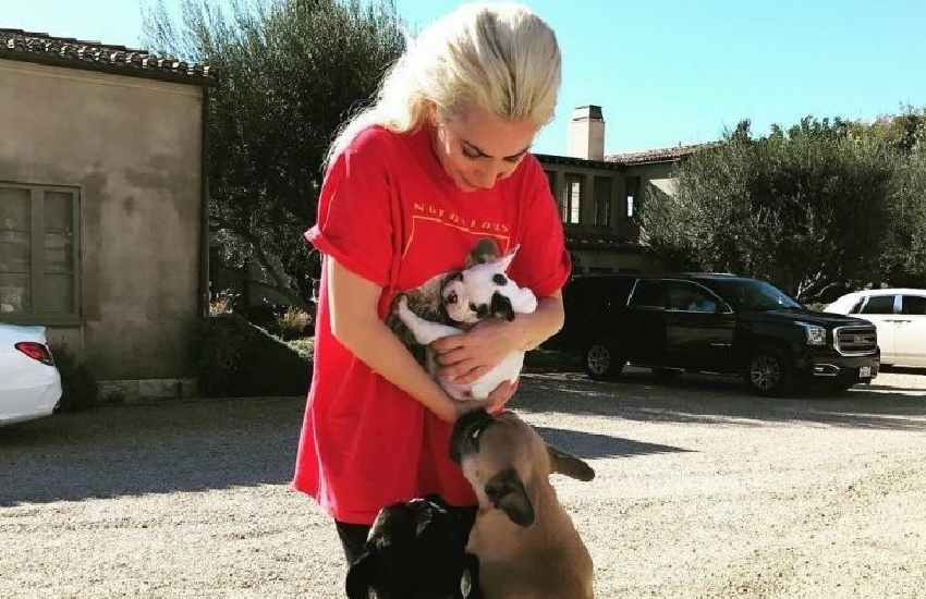 Lady Gaga's two abducted bulldogs returned unharmed to police