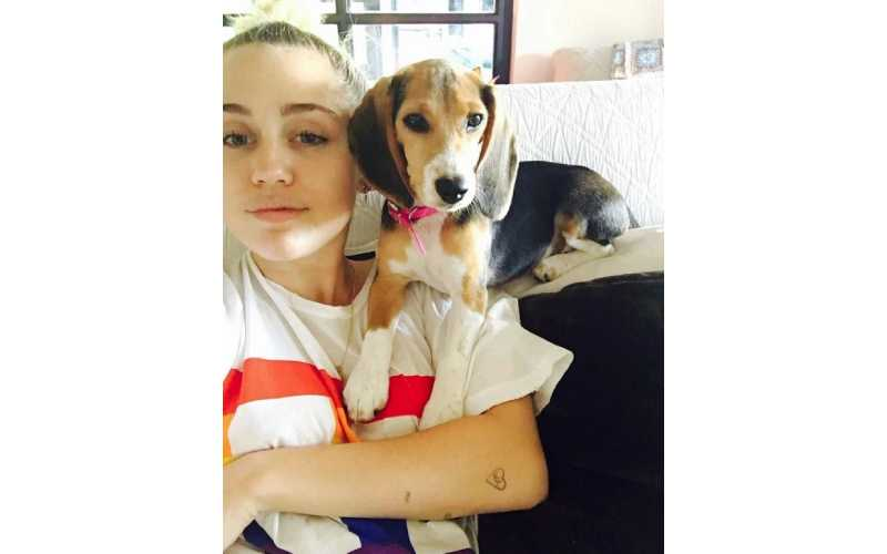 Miley Cyrus's pet dog nearly dies after violent electrocution on set of The Voice