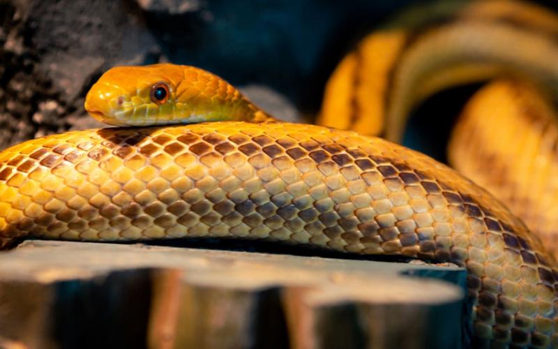 Tharaka Nithi man shocks residents, confesses he enjoys snake, dog meat