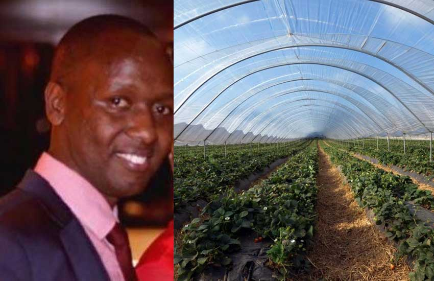 Millions up in smoke? Kenyans up in arms over greenhouse deal