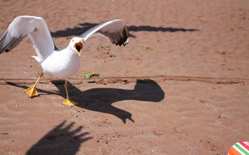 Why MP wants government to feed these birds with contraceptives