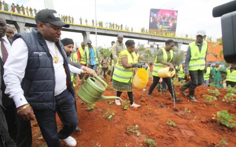 Sema urembo: Nairobi's trees, flowers, grass to chew Sh30M