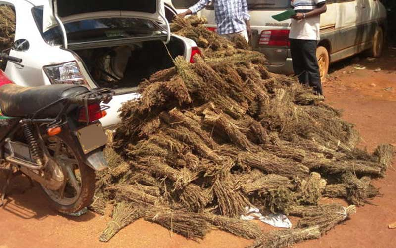 Two prison warders arrested over bhang