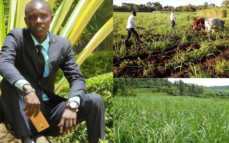 University student grows sugarcane with Helb money