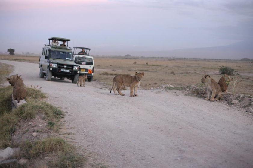 Beautiful views in Amboseli that make dusty park tick