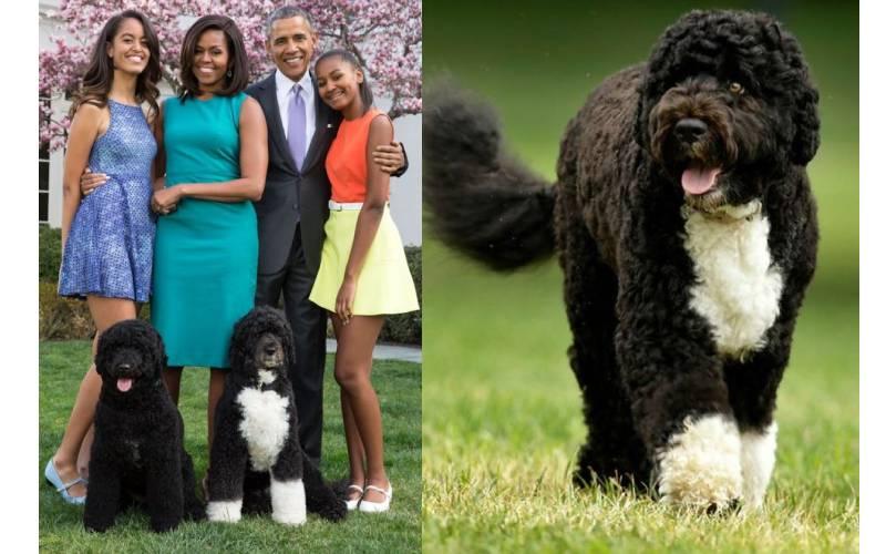 Bo Obama dead: Ex-US President Barack heartbroken as former 'First Dog' dies