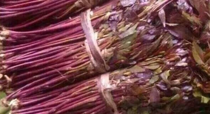 Commodities Fund tells court cash for miraa is safe