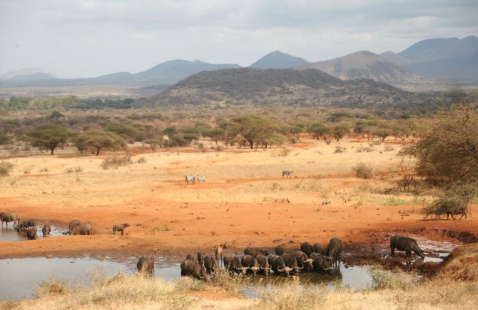 The thrilling sights and sounds of Tsavo West