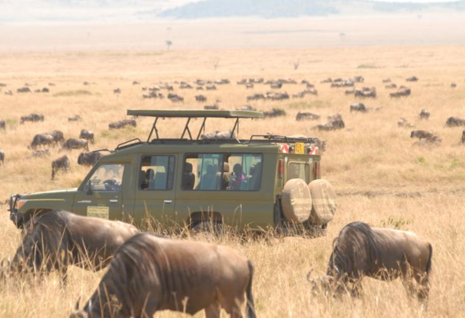 There is more to Mara than wildebeests