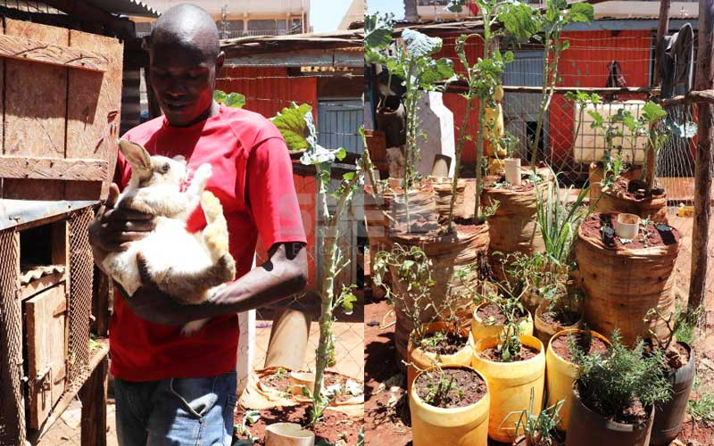 City slum farmers: Youth mint good bread growing mboga in baskets