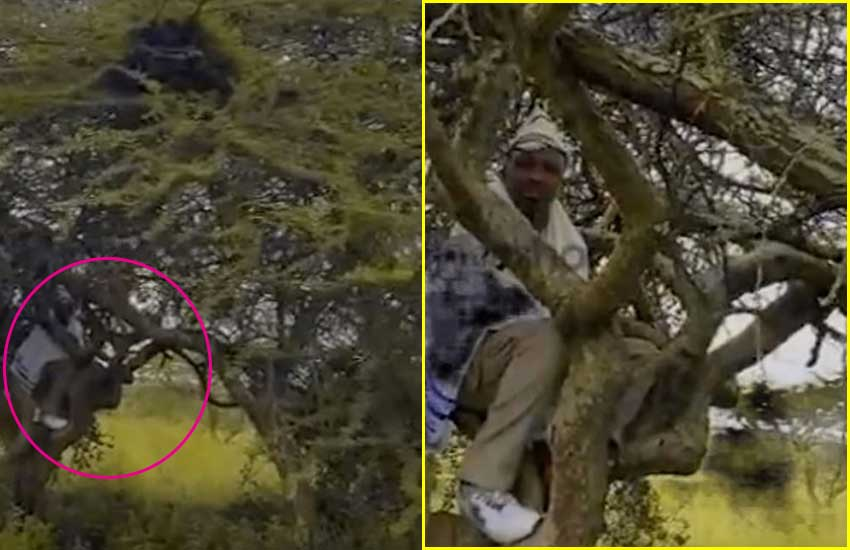 Video of Pastor Ng'ang'a in solitary retreat, on top of tree emerges