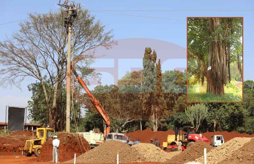 Standoff over felling of mugumo tree Moi planted in Nyeri