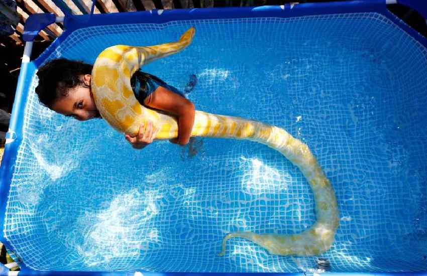 Meet eight-year-old Israeli girl making a splash with pet python