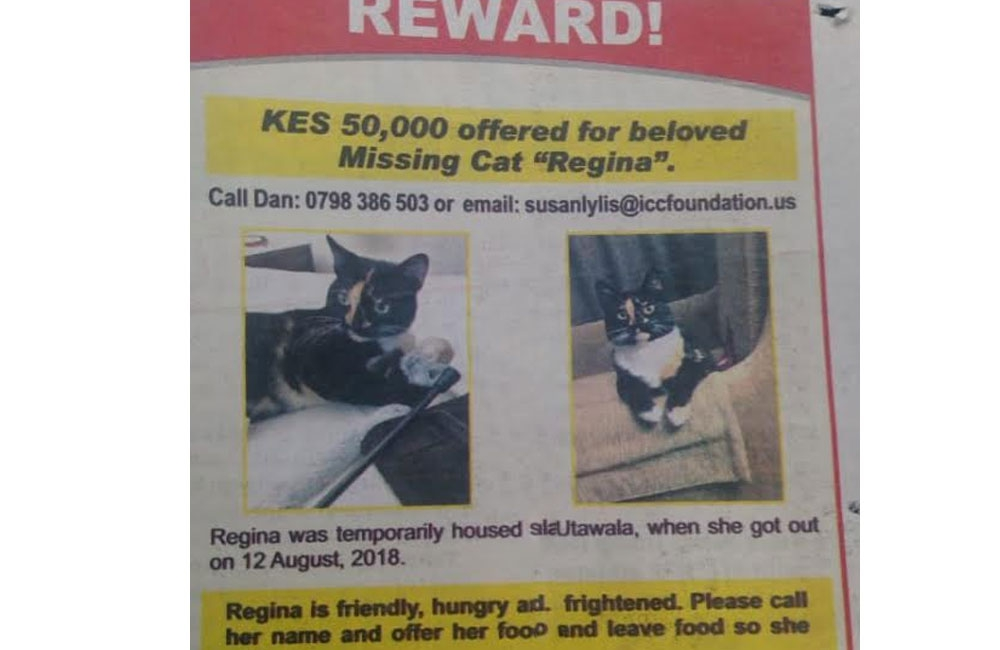 Kenyans react to ad of a Sh 50,000 reward for lost cat