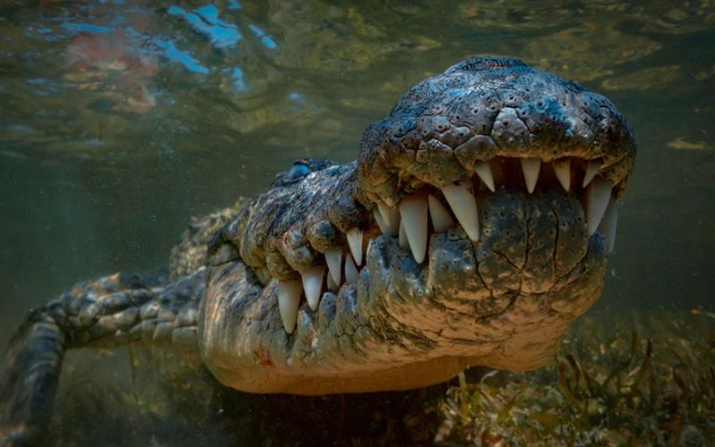 Meru Museum: Crocodile farmers to receive eggs soon
