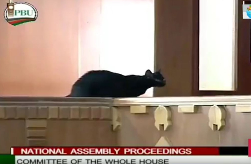 Video: Black cat temporarily interrupts Parliament proceedings