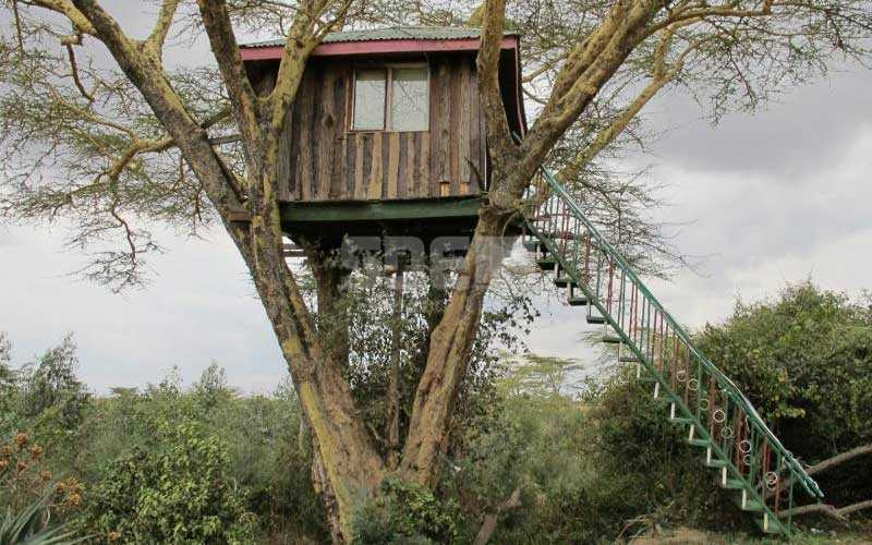 Where lovers pay to 'live like monkeys' in a tree