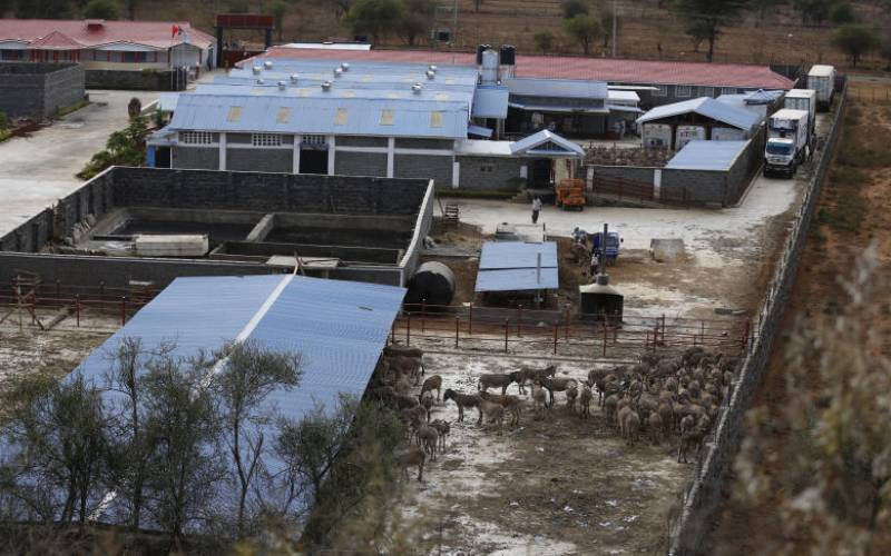 Goldox battles State over ban on donkeys slaughter