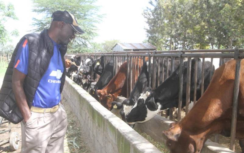 Hustle Gang: Fred Obachi Machoka's highs and lows ranching in arid Kajiado County