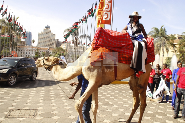 Laikipia beauty arrived gracefully on a camel waving to her fans as she alighted