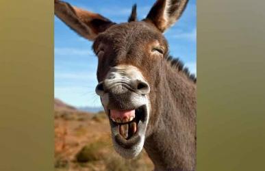 Punda amechoka: Vets demand Kenya bans donkey meat